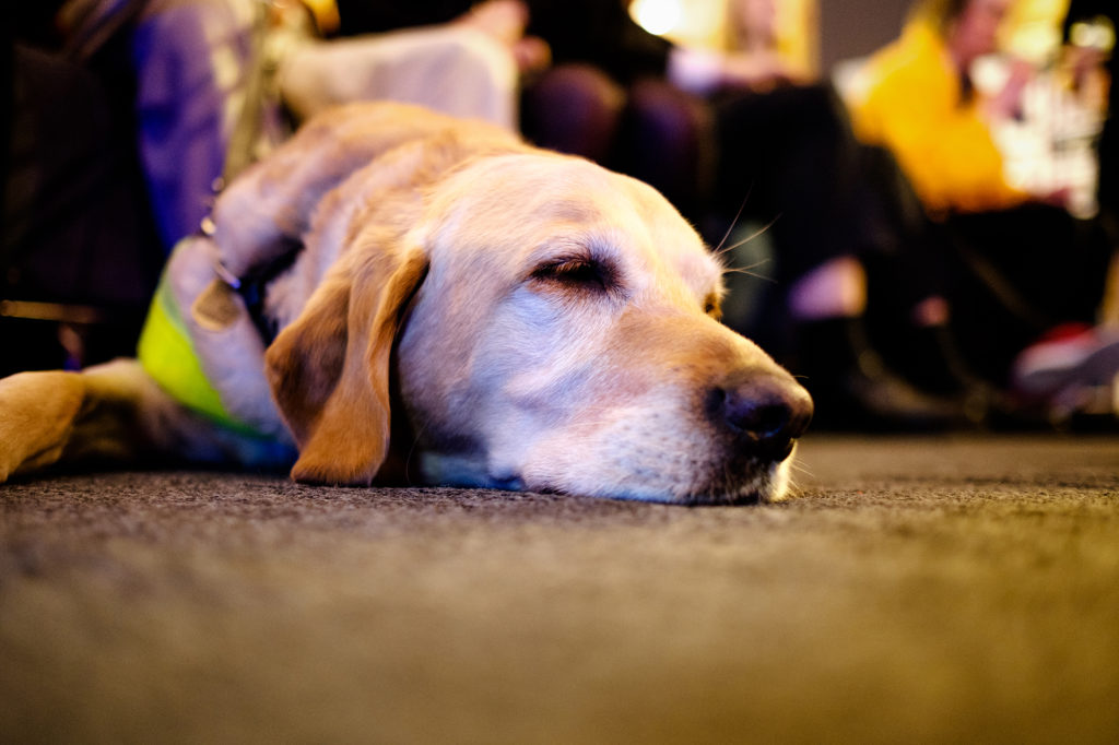 Close up of a dog's face resting on the ground, eyes half closed and in a peaceful state.